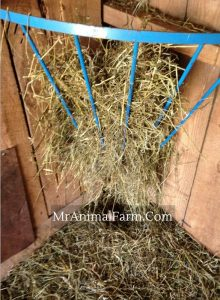 hay feeder with hay