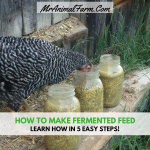 fermented feed