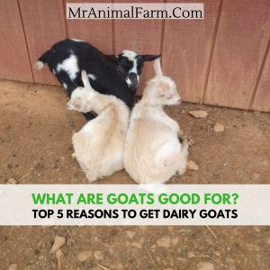 what are goats good for