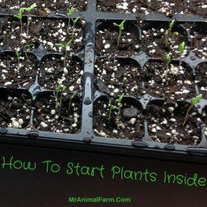 start plants inside