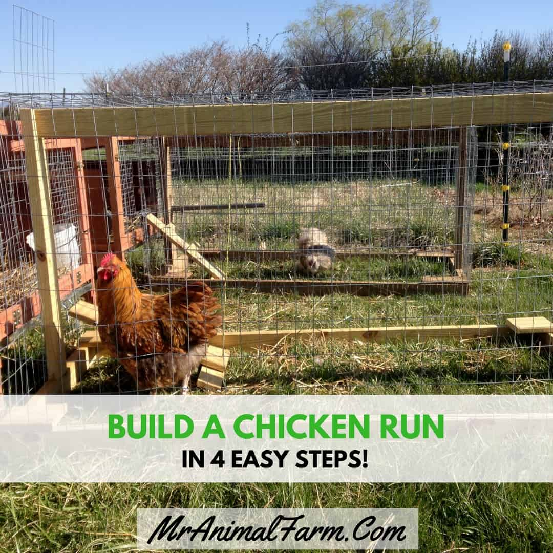 How To Build A Chicken Run In 4 Easy Steps