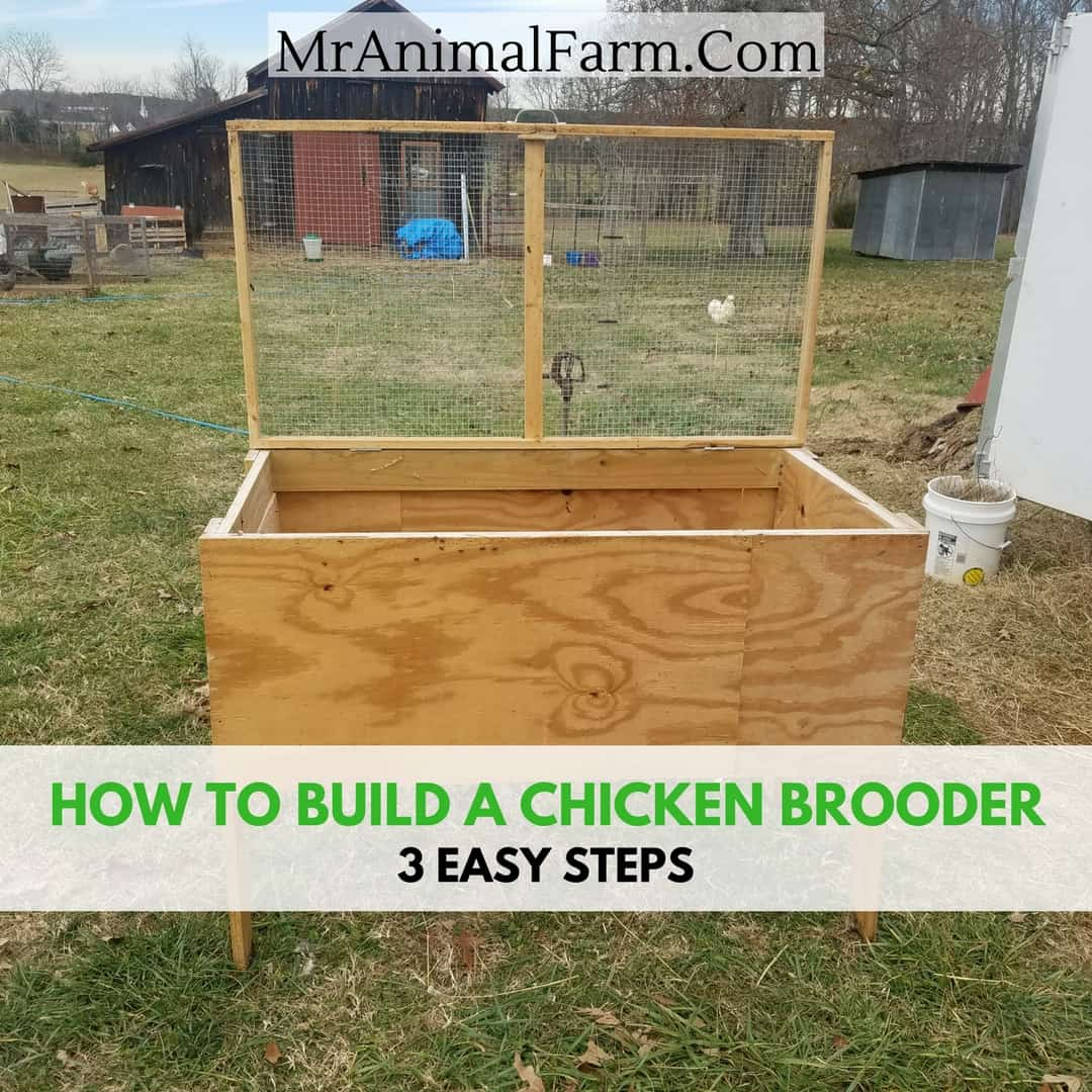 Chick brooder plans how to build a brooder in 3 steps How to build a farmhouse