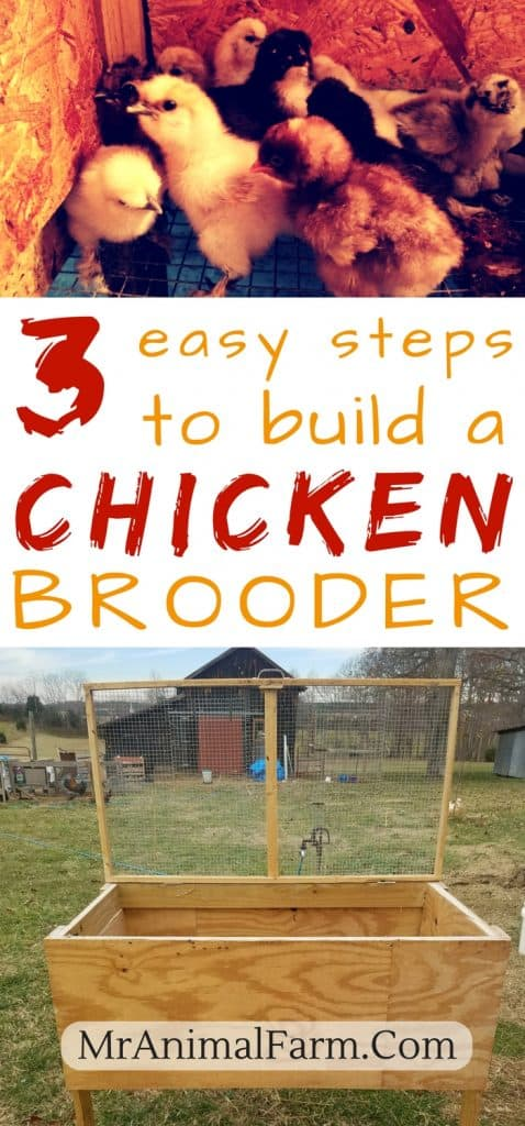 chicken brooder plans