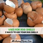Uses for Eggshells - 5 Ways to Use your EggShells