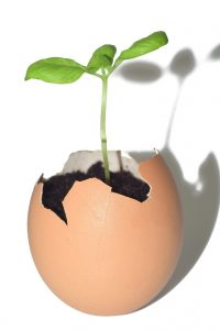 eggshell used for starting a plant