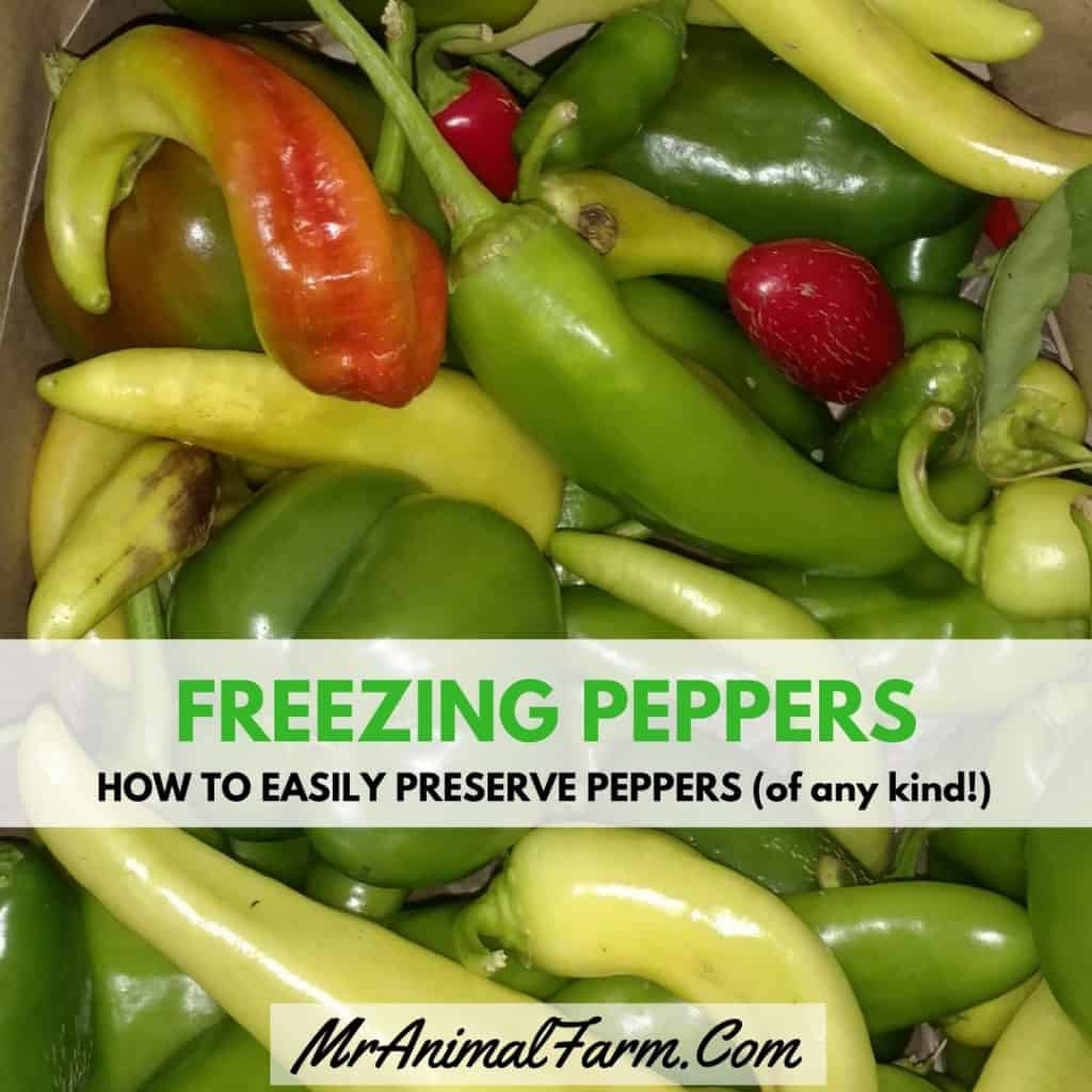 "bag of various types of peppers. text reads, ""freezing peppers. how to easily preserve peppers (of any kind!)"