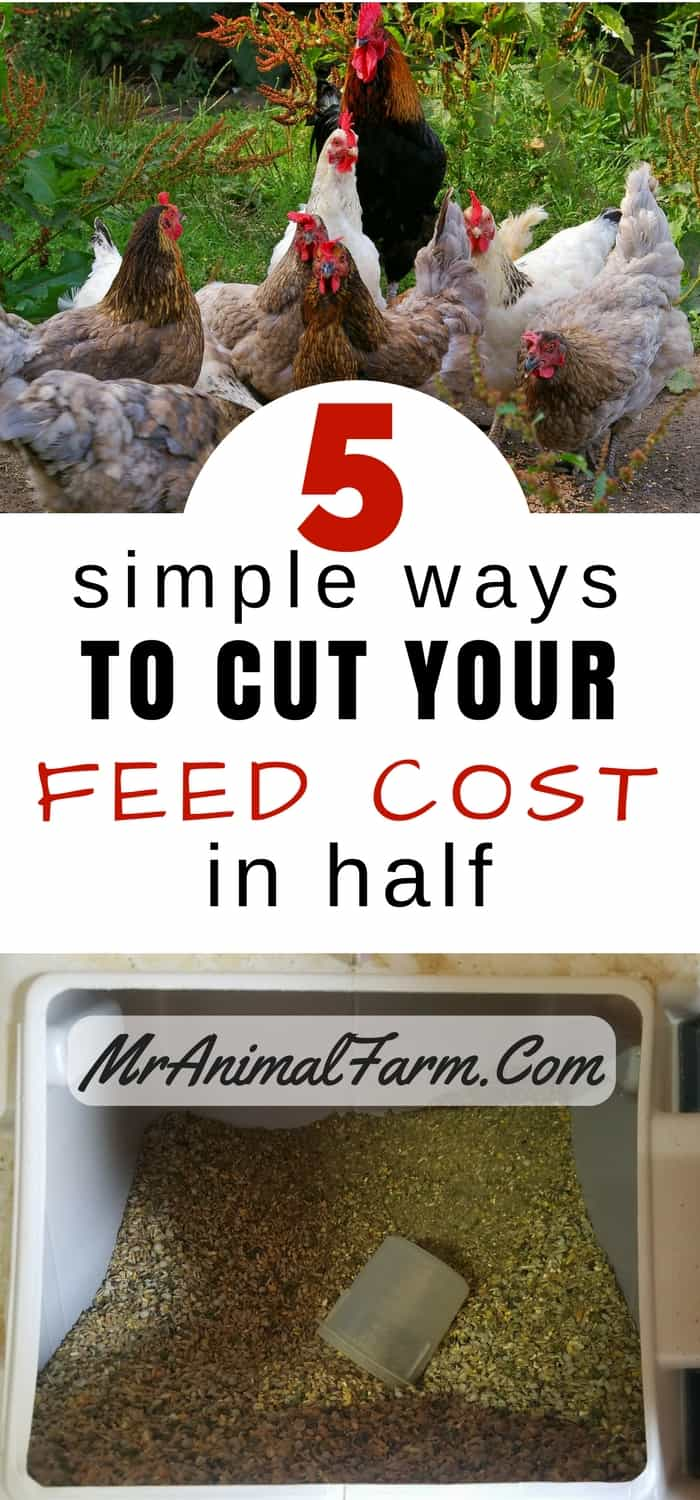 """pinterest image. top block: flock of 6 hens and 1 rooster. bottom block: bin of chicken feed. middle text block states, """"5 simple ways to cut your feed cost in half"""""""