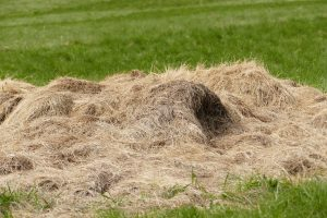 pile of hay on the ground
