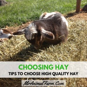 Choosing Hay – Tips to Choose High Quality Hay Instagram