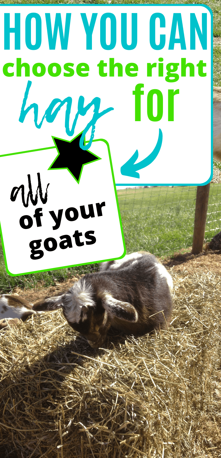 "pinterest image of baby goat sleeping on hay bale. text reads, ""how you can choose the right hay for all of your goats."""