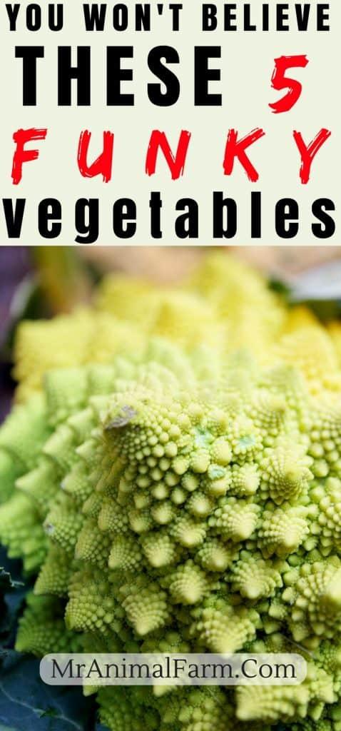 Unusual Vegetables