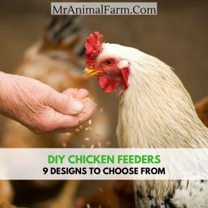 diy chicken feeders