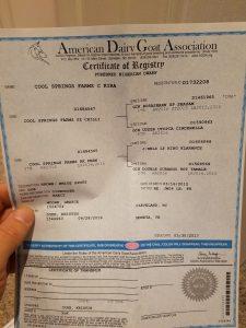 ADGA registration