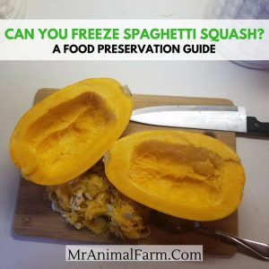 Can You Freeze Spaghetti Squash
