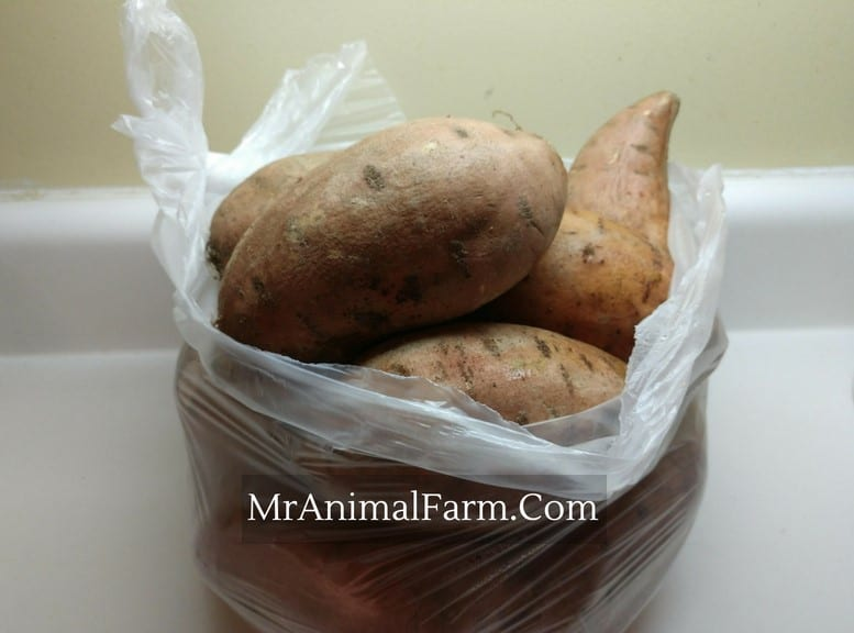 Sweet Potatoes in a plastic bag