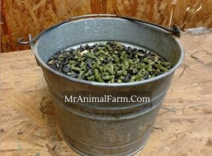 bucket of alfalfa pellets and black oil sunflower seeds