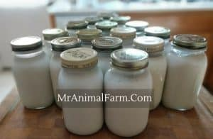 goat milk in several quart jars