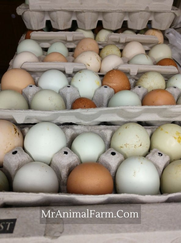 different colored eggs in egg cartons