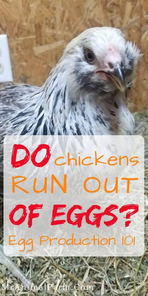 How Long Do Chickens Lay Eggs