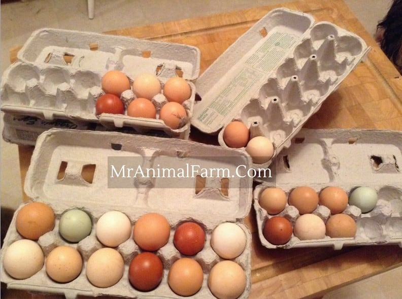 4 cartons of eggs