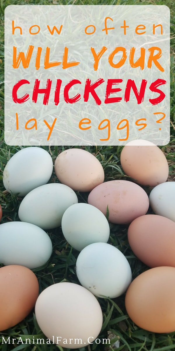 "pinterest image with pile of eggs in grass. Text reads, ""How Often Will Your Chickens Lay Eggs?"""