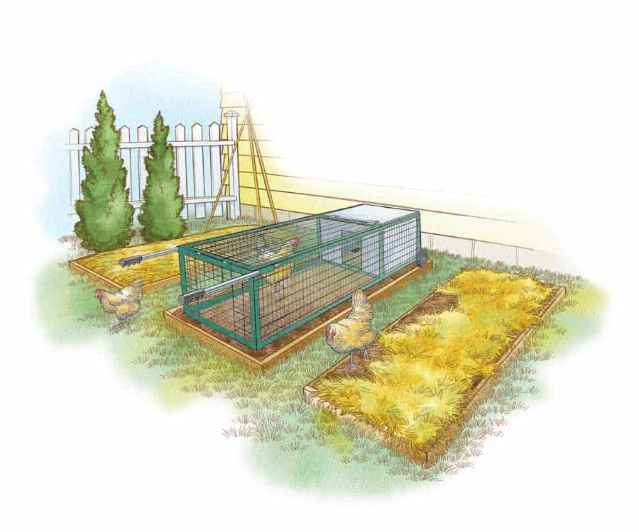 artists rendition of basic chicken coop