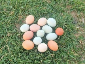 pile of eggs in grass