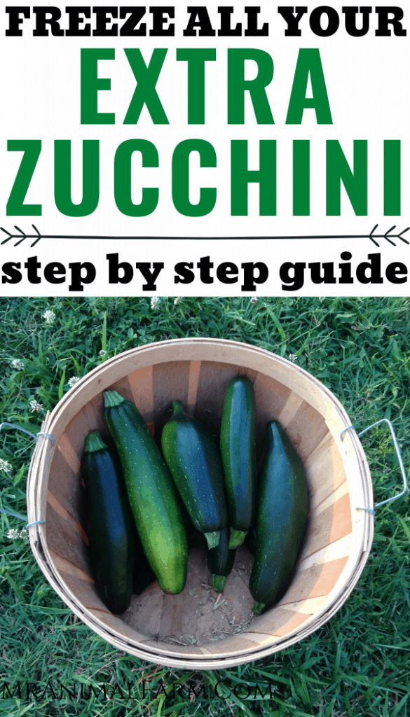 "Pinterest image of zucchini in a harvest basket with text reading, ""Freeze all your extra zucchini step by step guide"""