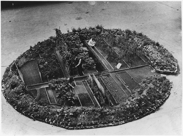 garden grown in bomb crater