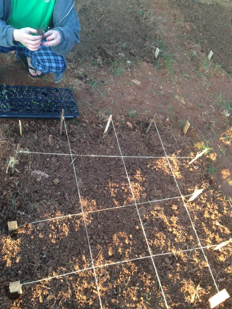 string used to make a square foot gardening planting box