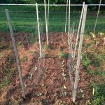 trellis made of stakes and fencing