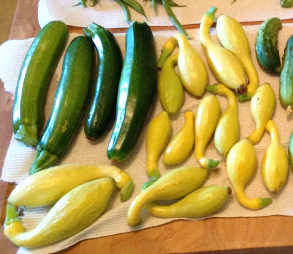 yellow squash and zucchini from our garden