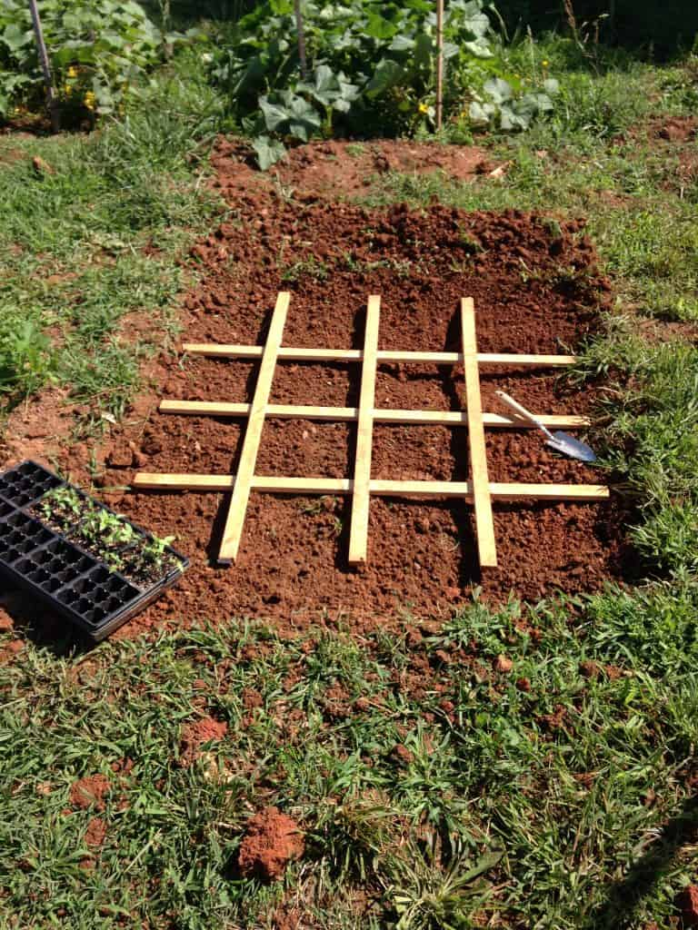 square foot gardening grid