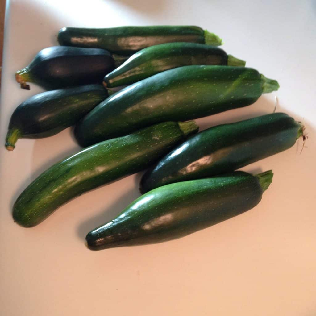 pile of 8 zucchini of various sizes