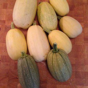 featured image for growing spaghetti with several spaghetti squash