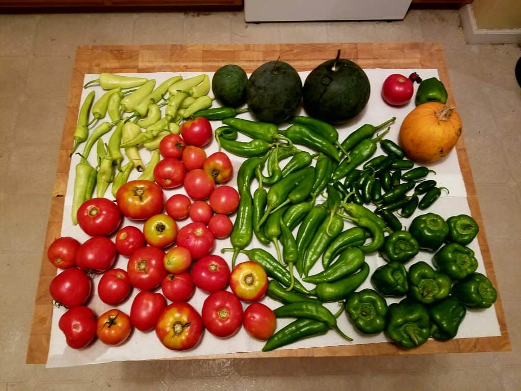 a variety of harvested peppers, tomatoes, winter squash, and a pumpkin