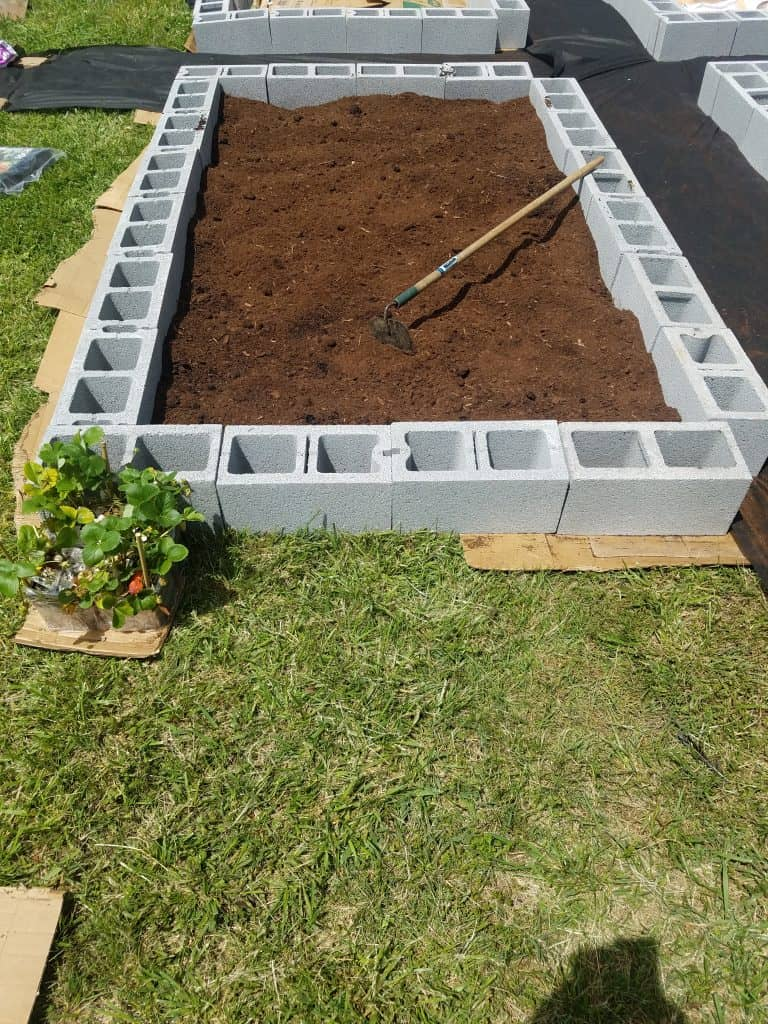raised bed ready to plant