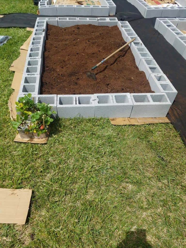 raised bed for container vegetable gardening