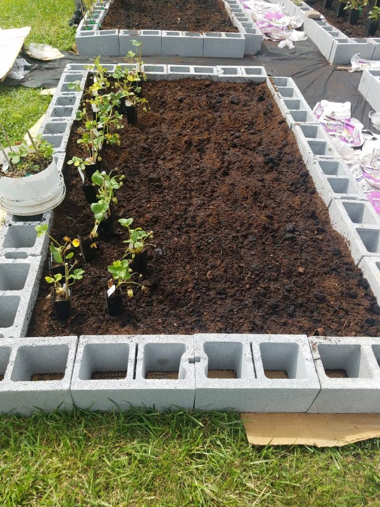 raised bed with mixed soil and a row of strawberry plants