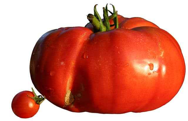 a beefsteak tomato next to a cherry tomato