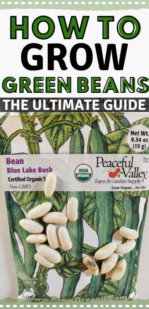 "pinterest image of green bean seed packet with seeds on top. Text reads, ""How to grow green beans. The ultimate guide."""