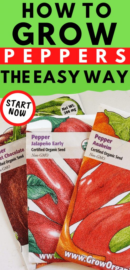 """pinterest image of anaheim, jalapeno, and chocolate pepper seed packets. Text reads, """"How to grow peppers the easy way. Start now."""""""