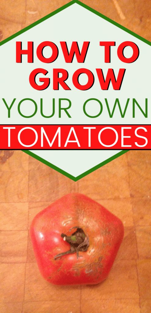 "pinterest image close up of tomato. Text reads, ""how to grow tomatoes"""