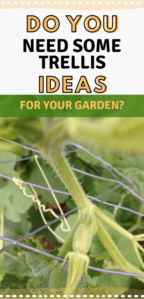 """pinterest image with cucumber vine grabbing trellis. text reads, """"do you need some trellis ideas for your garden?"""""""