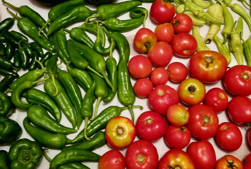 featured image for 'what vegetables are actually fruits'. tomatoes and peppers