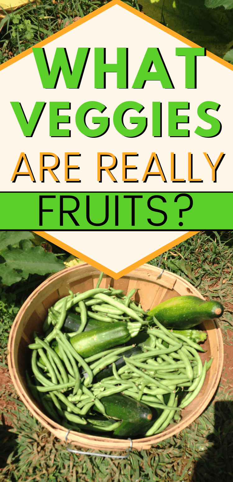 "pinterest image for 'what vegetables are actually fruits' with basket of green beans and zucchini. text reads, ""what veggies are really fruits?"""