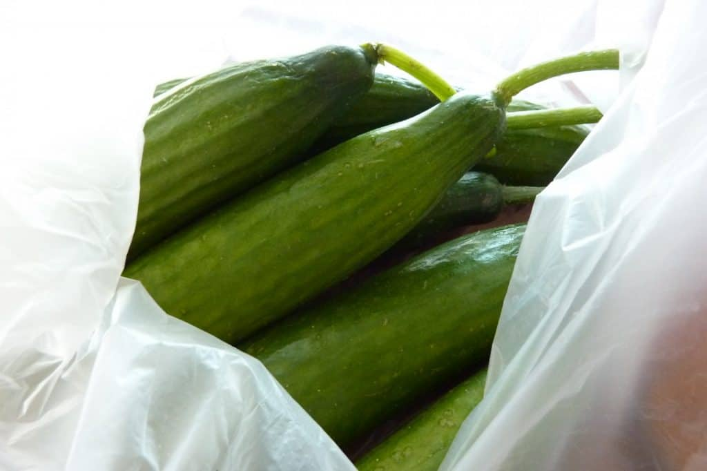Lebanese cucumbers in bag