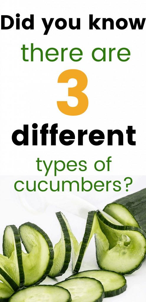 "pinterest image for types of cucumbers. Text reads, ""did you know there are 3 different types of cucumbers?"""