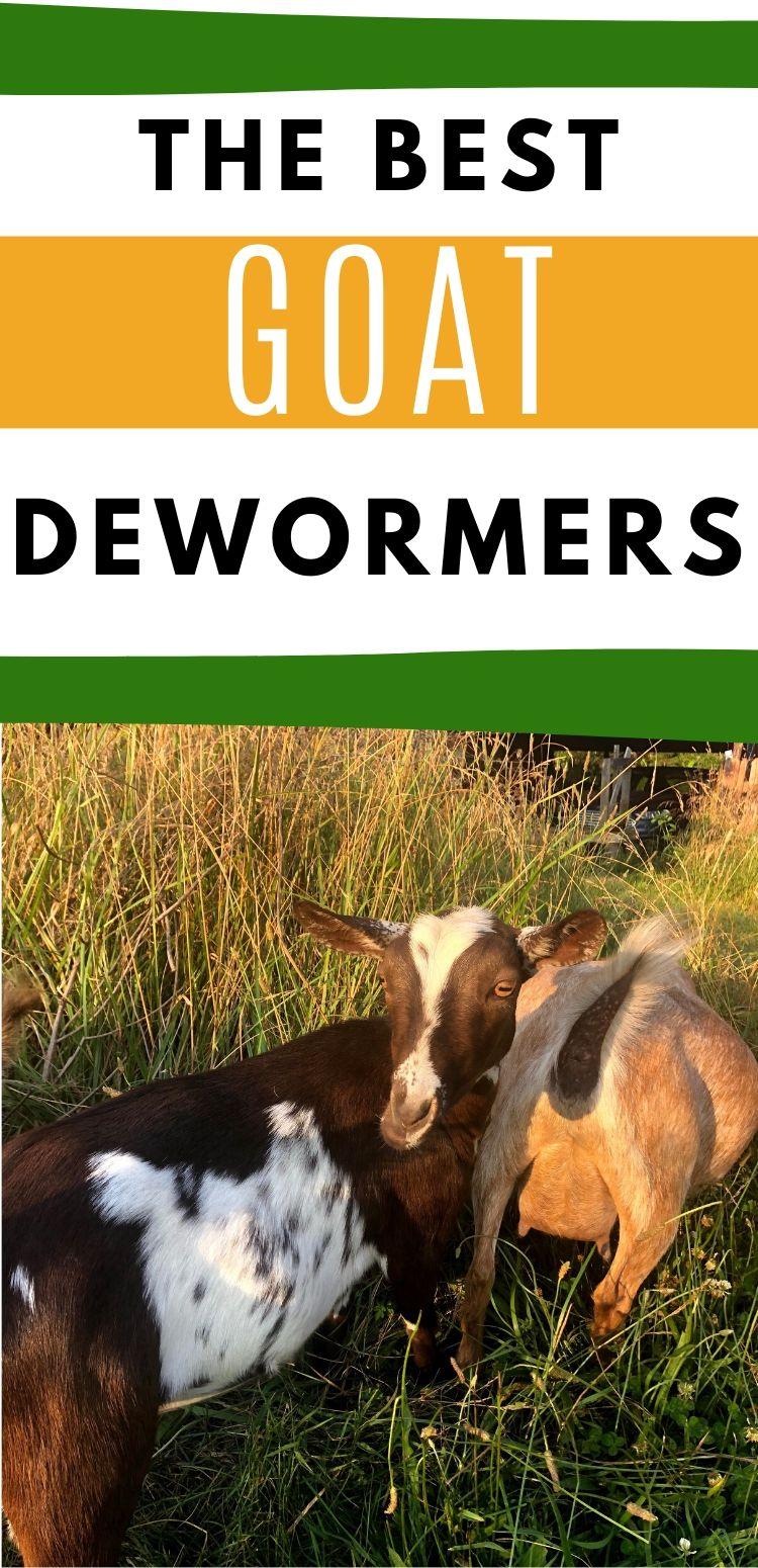"pinterest image of 2 goats grazing. text reads, ""the best goat dewormers"""